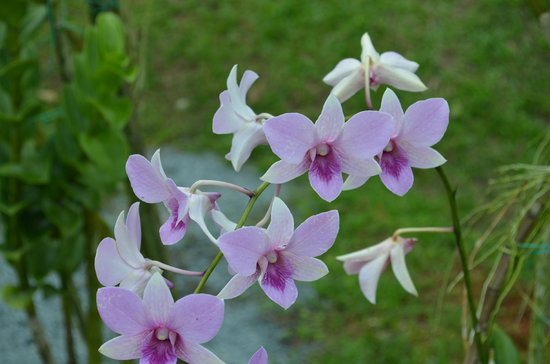 Sarawak Orchid Garden : 3