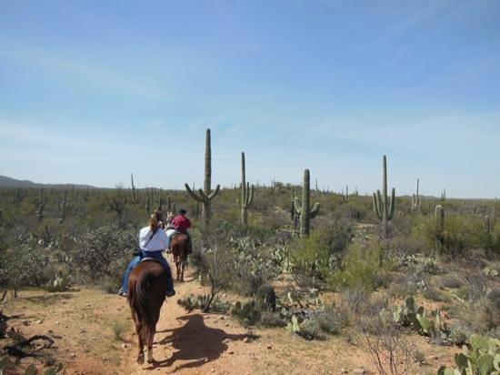 Houston's Horseback Riding : Horseback riding in Saguaro national park