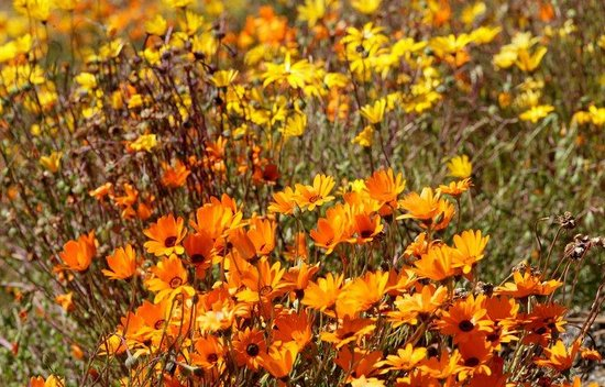 Alta Vista Gardens : field of spring flowers