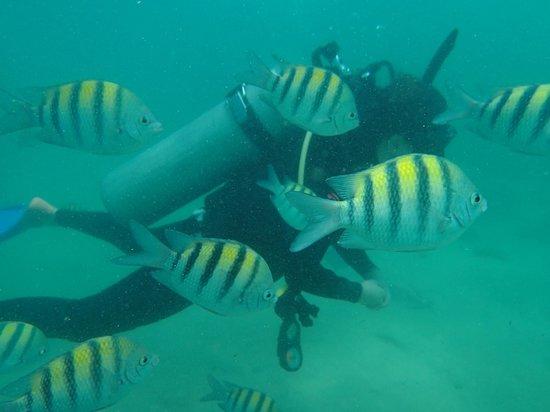 Aqua Adventure : Fish!