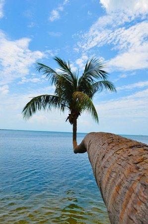 Nice Beach Resort Auserhalb