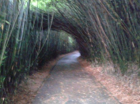 Jardim Botânico de São Paulo: Lindo