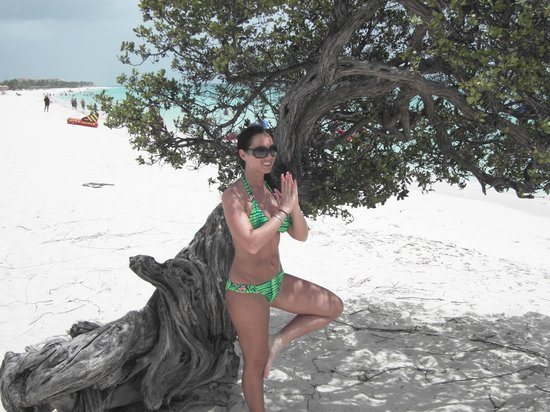 Eagle Beach -Divi Tree