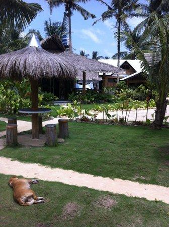 Kermit Surf Resort Siargao: garden