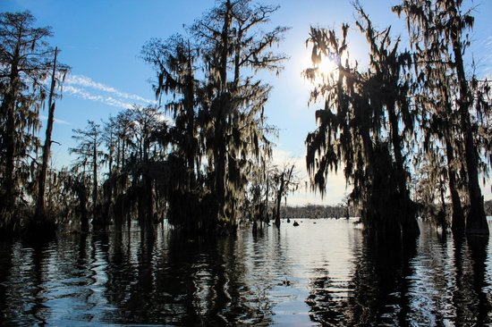 Champagne's Cajun Swamp Tours: Evening on the swamp