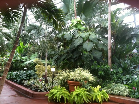 Garfield Park Conservatory: Palm room