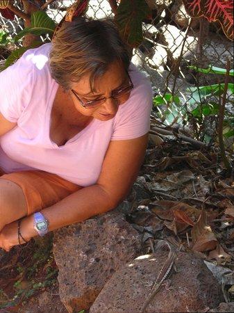 Hostal Casa de Laura: Doña Laura talks to a lava lizard