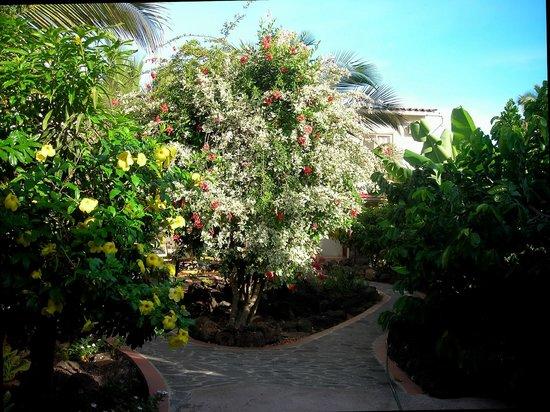 Hostal Casa de Laura: entering the garden courtyard at Casa de Laura