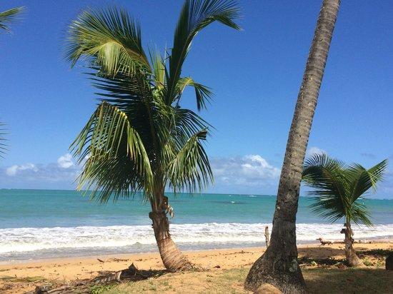 La Parrilla: Beach at La Parilla
