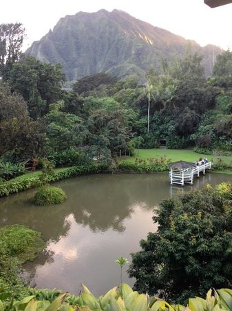 The beautiful view of Haiku Gardens from a table at Haleiwa Joe's