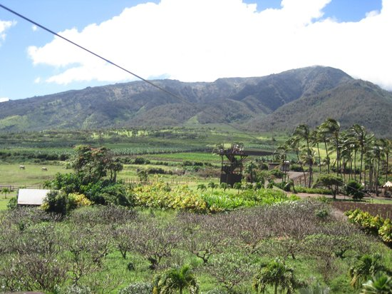 Maui Zipline Company : View from one zip line tower to another.