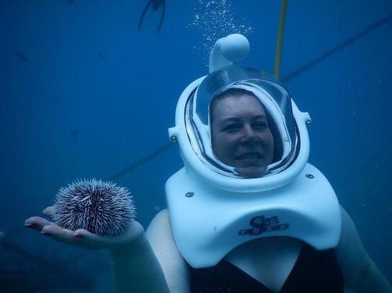 Sea Trek St. Maarten: Sea Urchin Photo by SeaTrek Divers