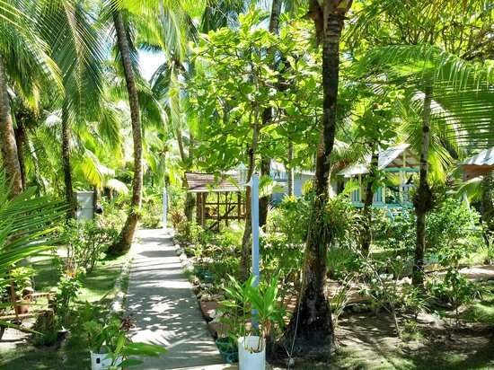 Careening Cay Resort: Path through the jungle garden - palms, hibiscus, hummingbirds and huge blue morpho butterflies