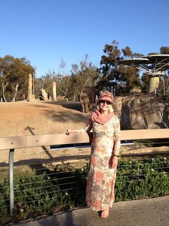 San Diego Zoo : New Elephant Area.. They are well cared for