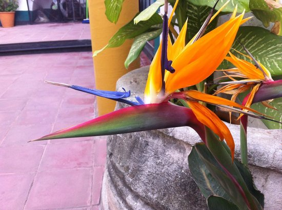 Hotel Posada del Centro: Amazing Flower in Courtyard