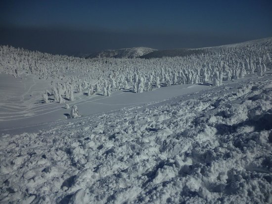 Frost Covered Trees of Zao: Snow Monster