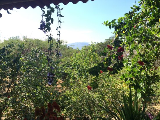 Finca del Sol: View from the breakfast area