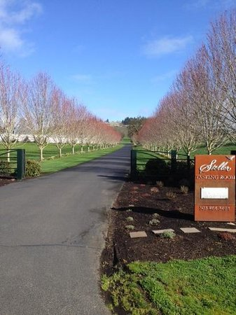 Stoller Vineyards Guest Houses: Our Driveway to the Estate House