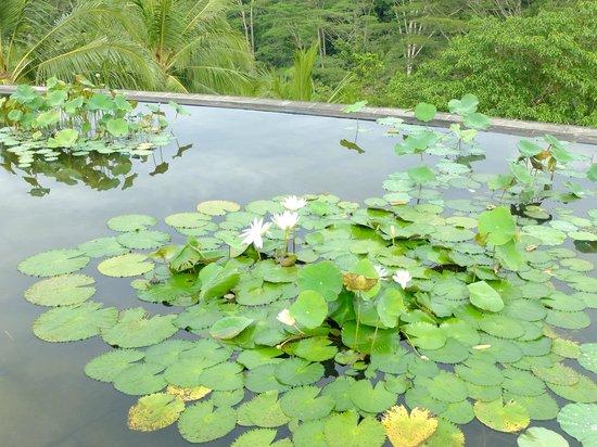 Four Seasons Resort Bali at Sayan: 蓮の池