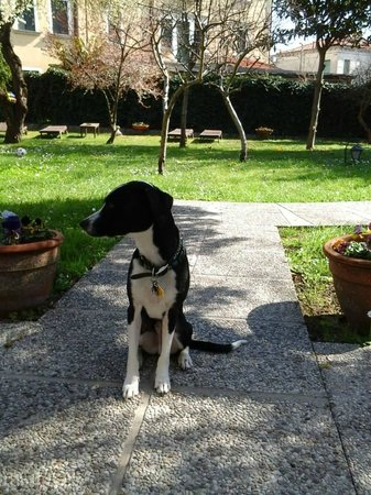 Hotel Villa Beatrice : They took a photo of our dog and put it on their facebook page, made me happy :-)