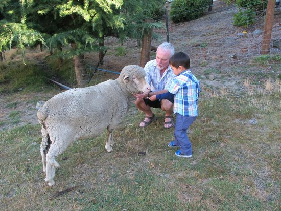 Alpine View Lodge: Feeding the sheep