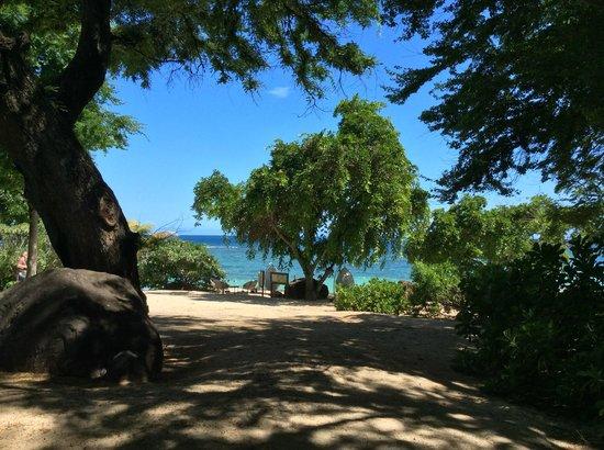 Club Med La Plantation d'Albion: une partie de la vue
