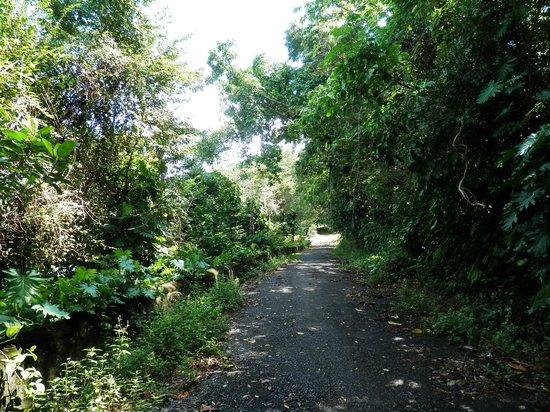 Drapers San: La strada per la piccola spiaggia ...