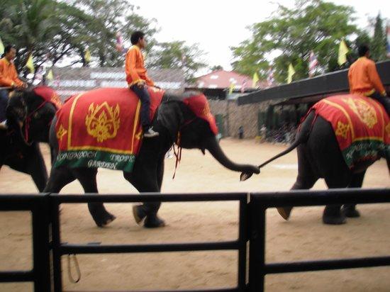 Nong Nooch Tropical Botanical Garden: Шоу слонов