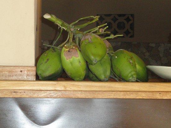 Mawimbi Lodge: cocco