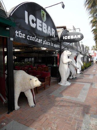 Benalmadena Puerto Marina : Het aantal beren groeit .