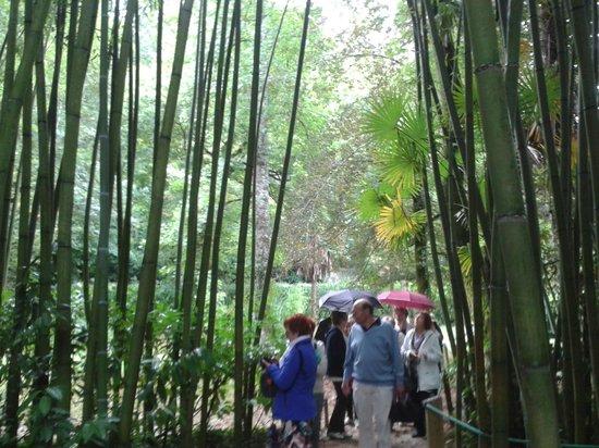 Parque Natural Señorío de Bertiz: EL Jardín (Bambú)