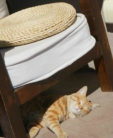 Dali Windoo Resort: sweet cat
