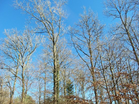 Alice Holt Forest : Clear sky's