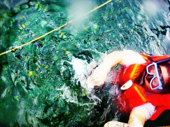 Coron Bay: fish feeding not needing to go deep