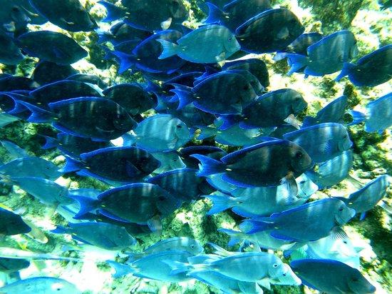 H2O Visions Bonaire: Snorkeling in Kralendijik, Bonaire
