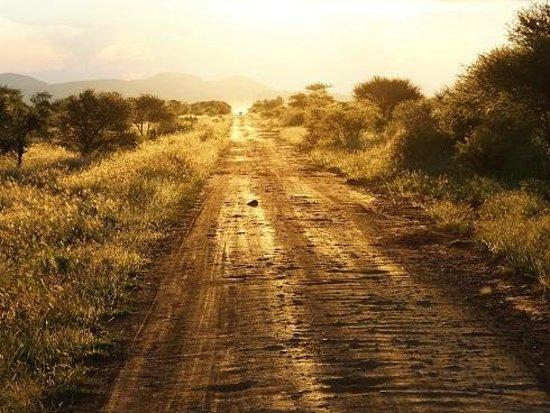 Jamala Madikwe: Sunset in Africa