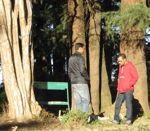 Hotel Bhagsu - HPTDC: side park