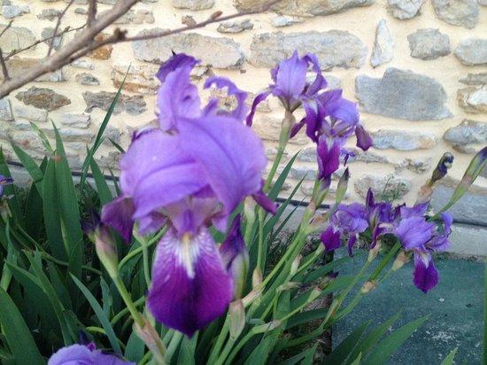 Le Mas d'Alphonse : Iris in thye garden