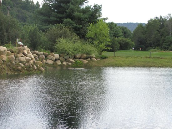 Cronin's Golf Resort: great pond for the birds and critters