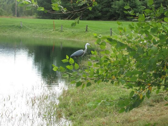 Cronin's Golf Resort: great water hole