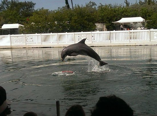 Theater of the Sea : Dolphin Show