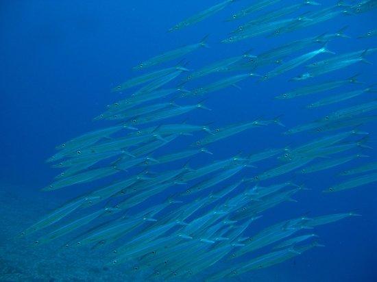 Micronesian Divers Association: skool