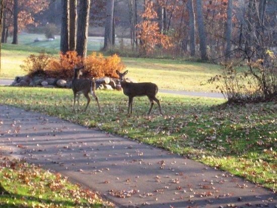 Kavanaugh's Sylvan Lake Resort : A Deer Friend!!