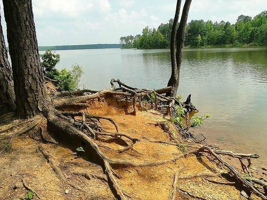 Jordan Lake State Recreation Area: drought shoreline