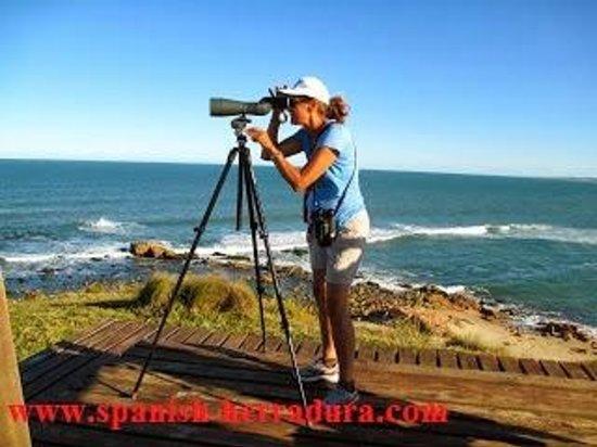 Centro de Enseñanza de Español La Herradura: Volunteer option at a sea turtle research and protect station