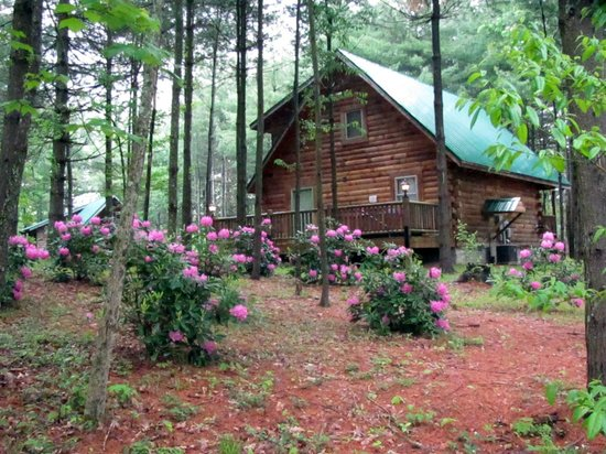 Cabins at Pine Haven: Spring is close at hand and the Flowers will be beautiful come see!