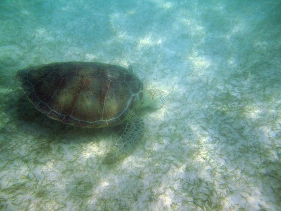 Akumal Dive Center: You are floating on top and can see turtles on the bottom