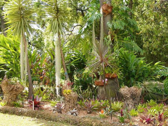 Quinta Jardins do Lago : Flowers in our Garden