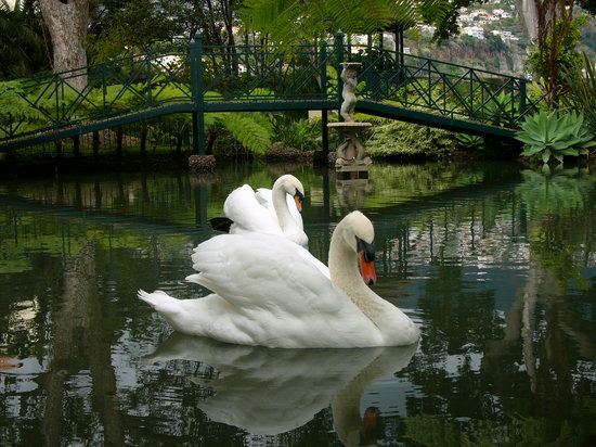 Quinta Jardins do Lago : Lake with Sawns