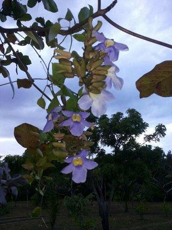 Hotel Hibiscus Garden: flower shower
